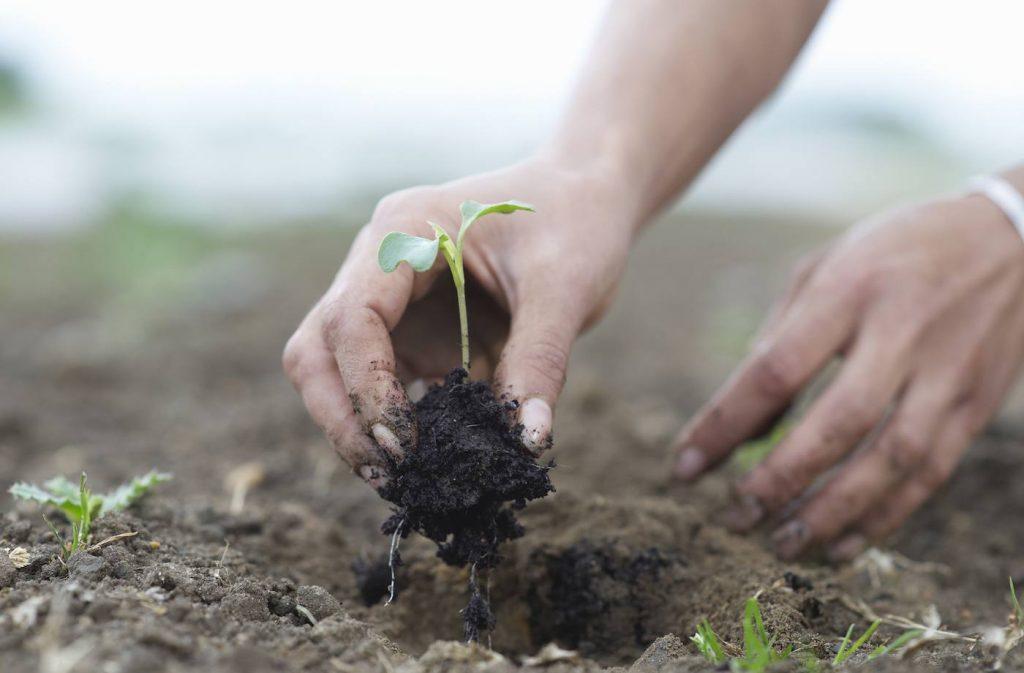 regenerative agriculture - Nobile Premium Bison farming